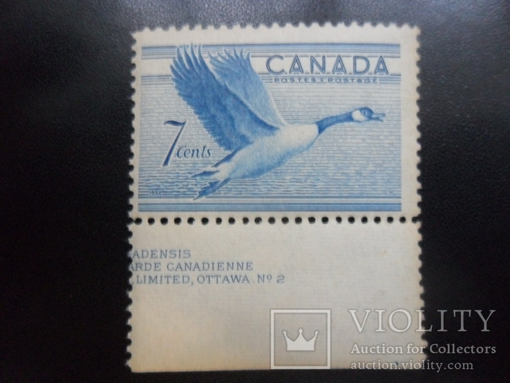 Фауна. Канада. Утка. поле MLH, фото №2