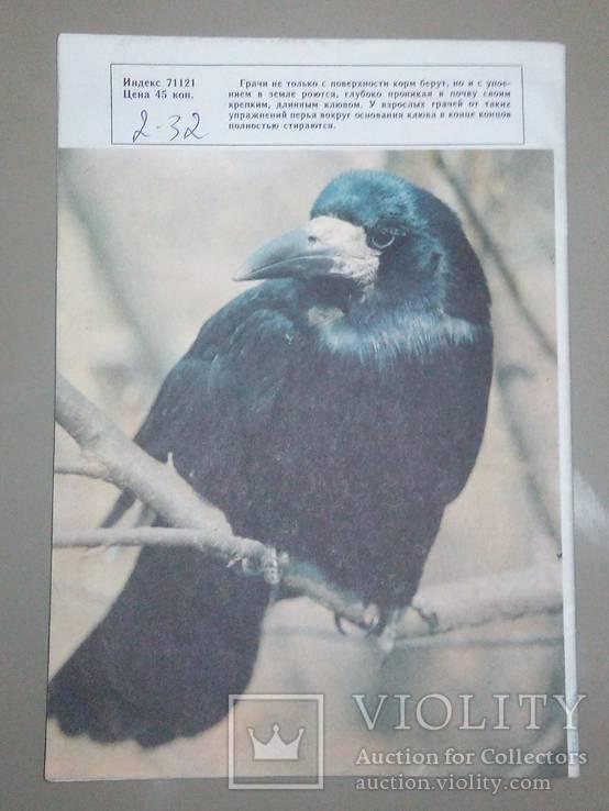 Журнал СССР Юный натуралист, фото №4