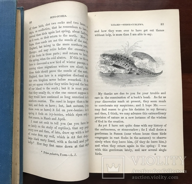 The Natural History of Selborne, фото №6