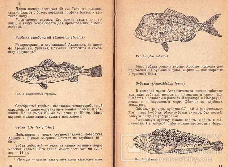Атлантические рыбы на нашем столе.1970 г., фото №5
