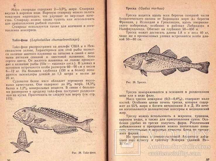 Атлантические рыбы на нашем столе.1970 г., фото №6