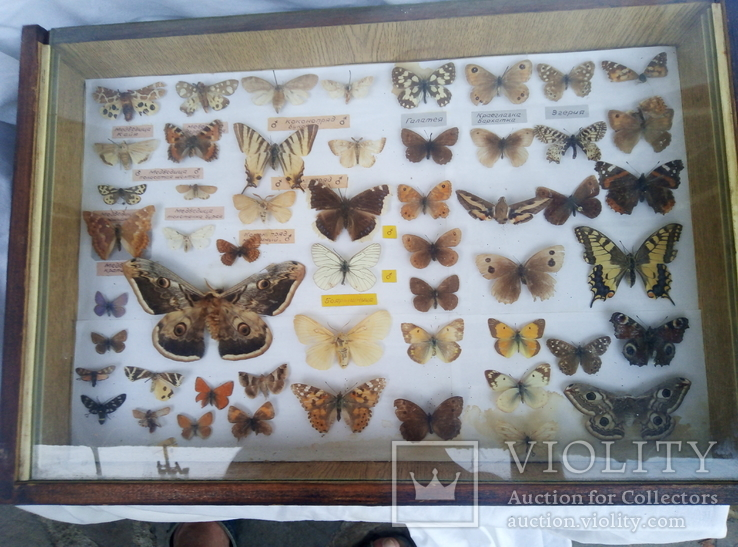 Подборка бабочек