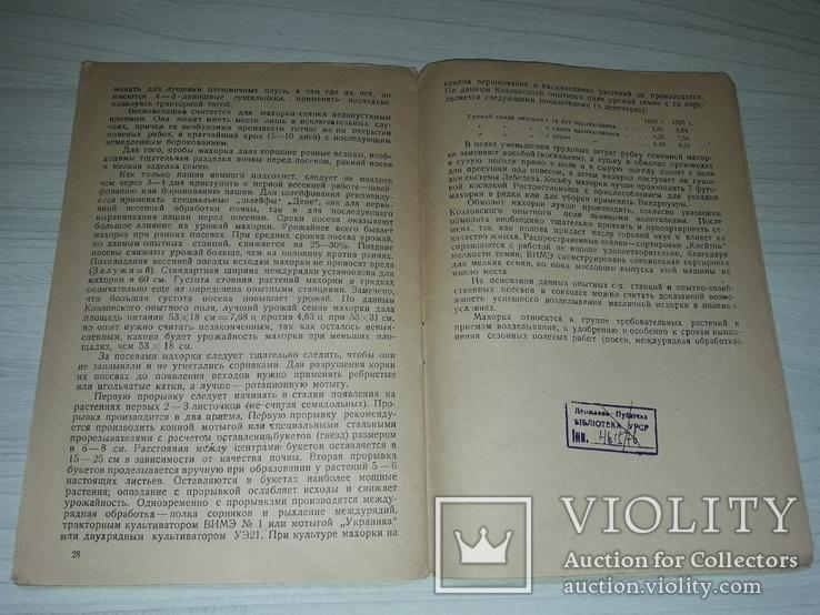 Махорка как масличное сырье 1932, фото №8