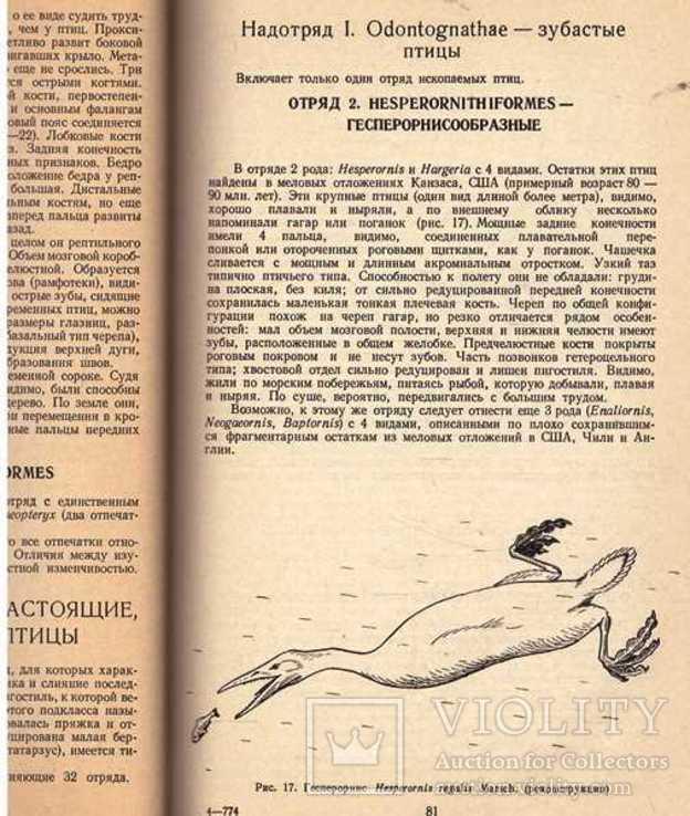 Систематика птиц.Авт.Н.Карташев.1974 г., фото №10