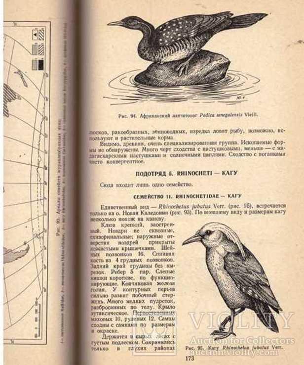 Систематика птиц.Авт.Н.Карташев.1974 г., фото №12
