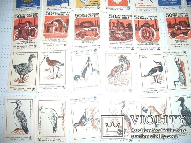 Спичечные этикетки,431 шт,целые серии,нулевые, фото №9