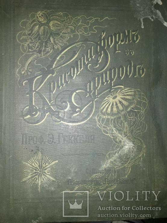 Красота форм в природе. Э. Геккеля. 100 таблиц с описательным текстом. 1904 год