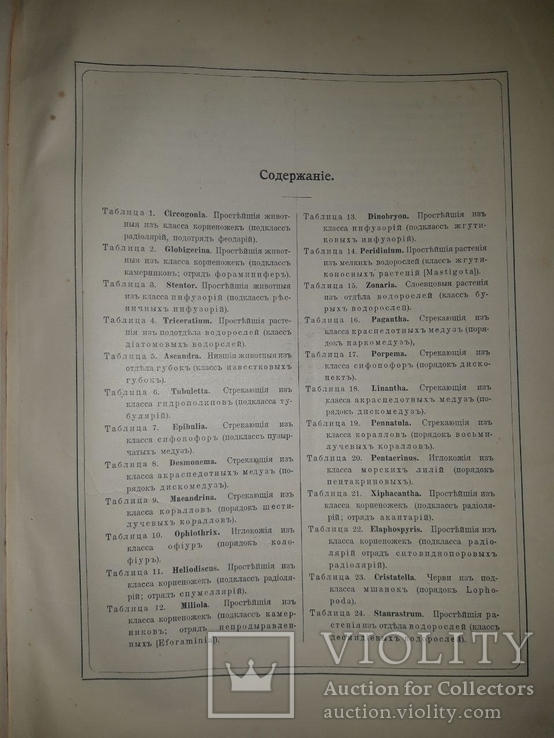 Красота форм в природе. Э. Геккеля. 100 таблиц с описательным текстом. 1904 год, фото №4
