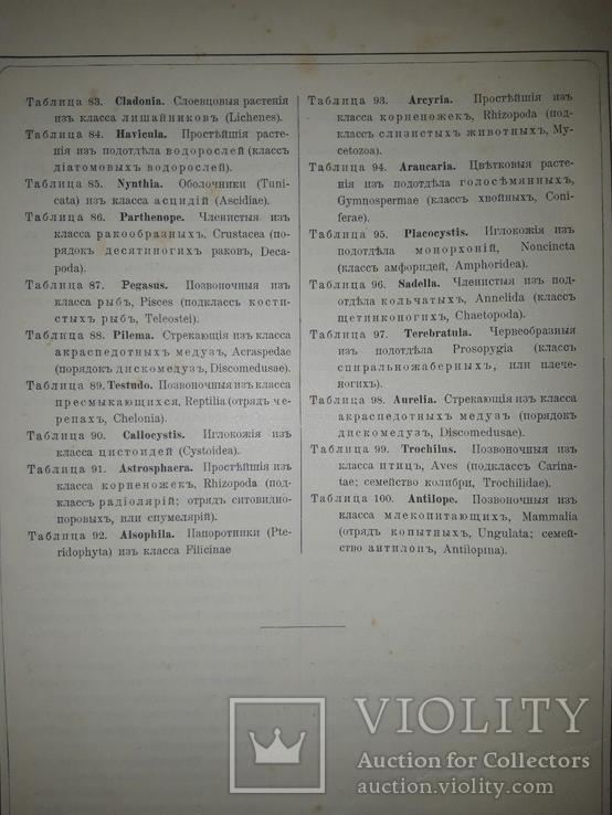 Красота форм в природе. Э. Геккеля. 100 таблиц с описательным текстом. 1904 год, фото №6