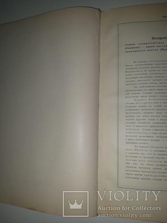 Красота форм в природе. Э. Геккеля. 100 таблиц с описательным текстом. 1904 год, фото №11