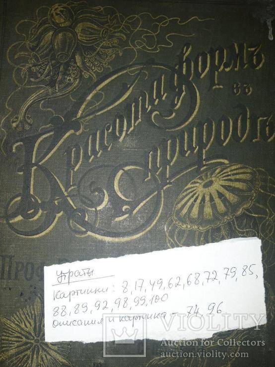 Красота форм в природе. Э. Геккеля. 100 таблиц с описательным текстом. 1904 год, фото №13