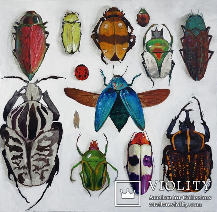 Энтомологическая коллекция насекомых №2, фото №2
