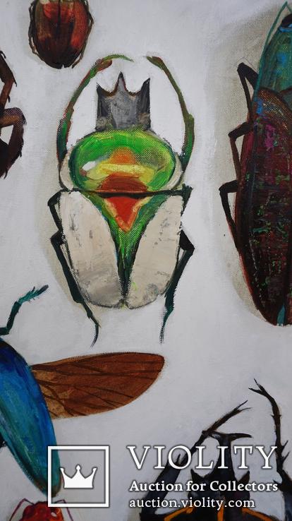 Энтомологическая коллекция насекомых №2, фото №3
