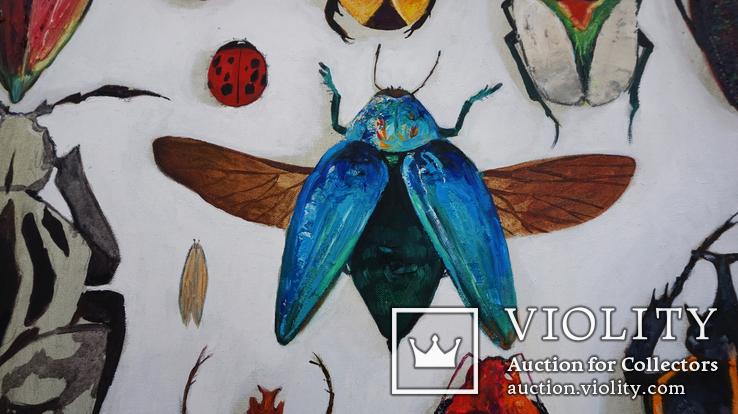 Энтомологическая коллекция насекомых №2, фото №5