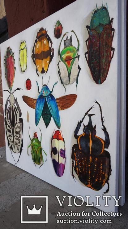 Энтомологическая коллекция насекомых №2, фото №6