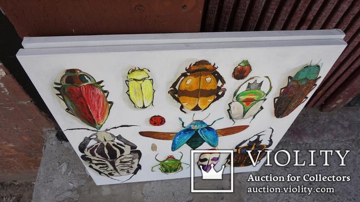 Энтомологическая коллекция насекомых №2, фото №7