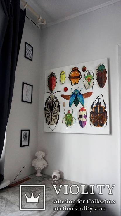 Энтомологическая коллекция насекомых №2, фото №9