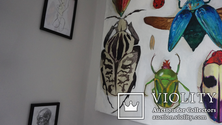 Энтомологическая коллекция насекомых №2, фото №11