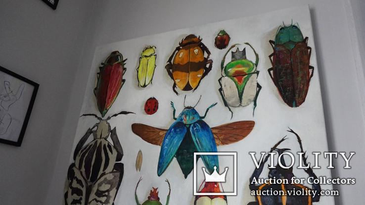 Энтомологическая коллекция насекомых №2, фото №12