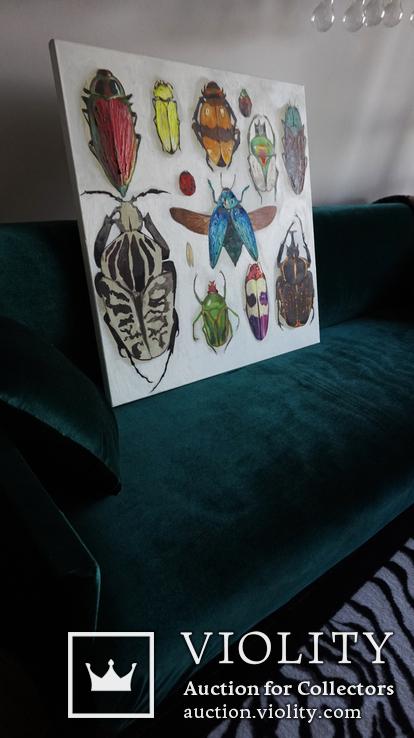 Энтомологическая коллекция насекомых №2, фото №13
