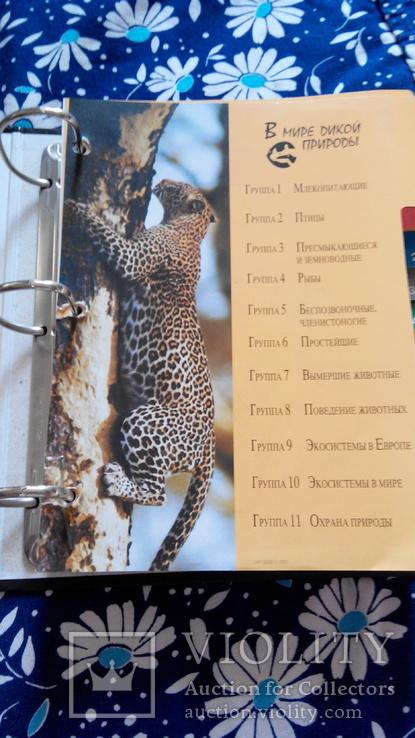 В мире дикой природы. Энциклопедия для детей в карточках., фото №3