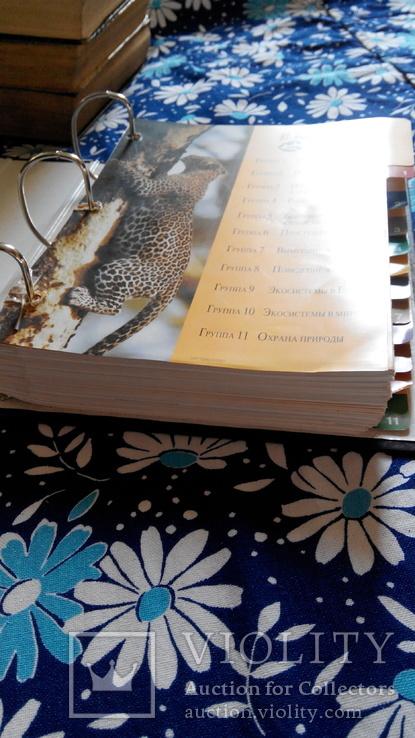 В мире дикой природы. Энциклопедия для детей в карточках., фото №8