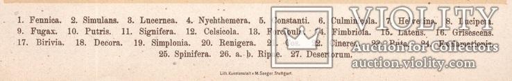 Старинная цветная литография.Gross-Schmetterlinge Europas. 1894 год. (28,6х21,1см.). (3).., фото №4
