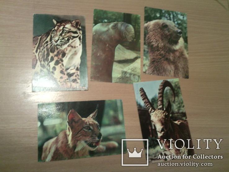 """10 открыток набор """"Зоопарк. Животные"""", фото №8"""