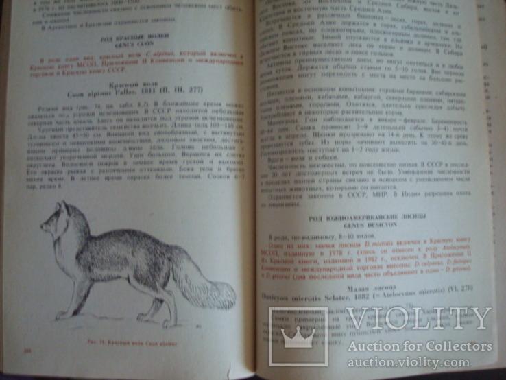 """""""Редкие и исчезающие животные"""" В.Соколов 1986г., фото №8"""