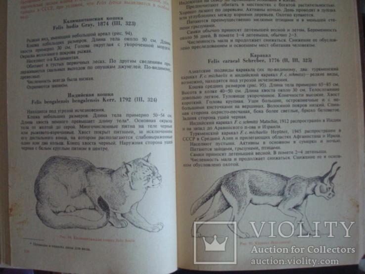 """""""Редкие и исчезающие животные"""" В.Соколов 1986г., фото №9"""