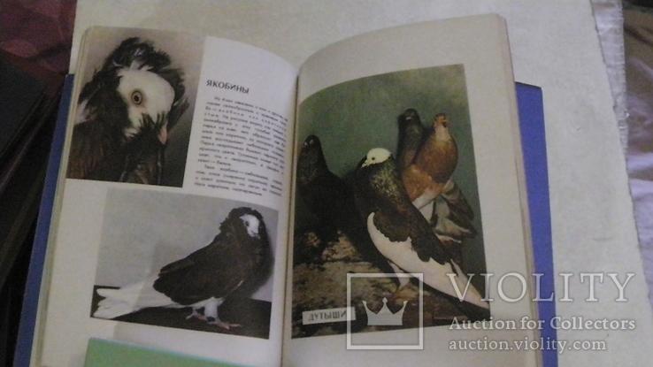 Голуби. Сборник статей. 1958 г., фото №7