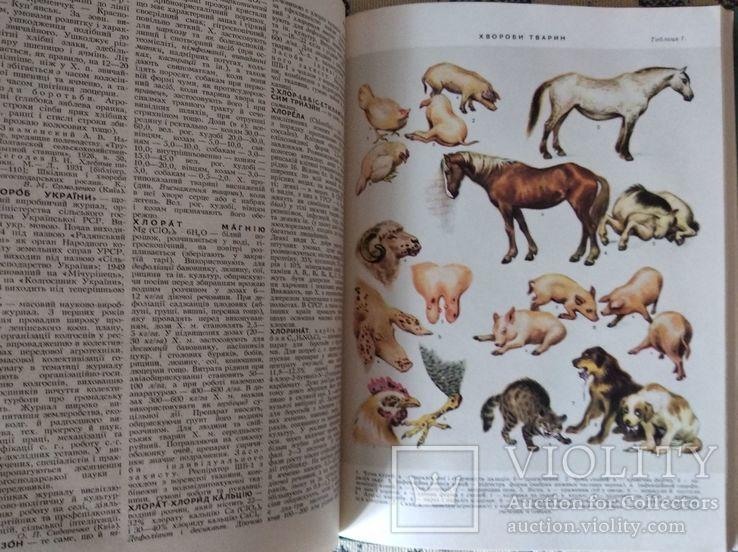 Украинская сельскохозяйственная энциклопедия, 1969, в 3 томах, фото №6