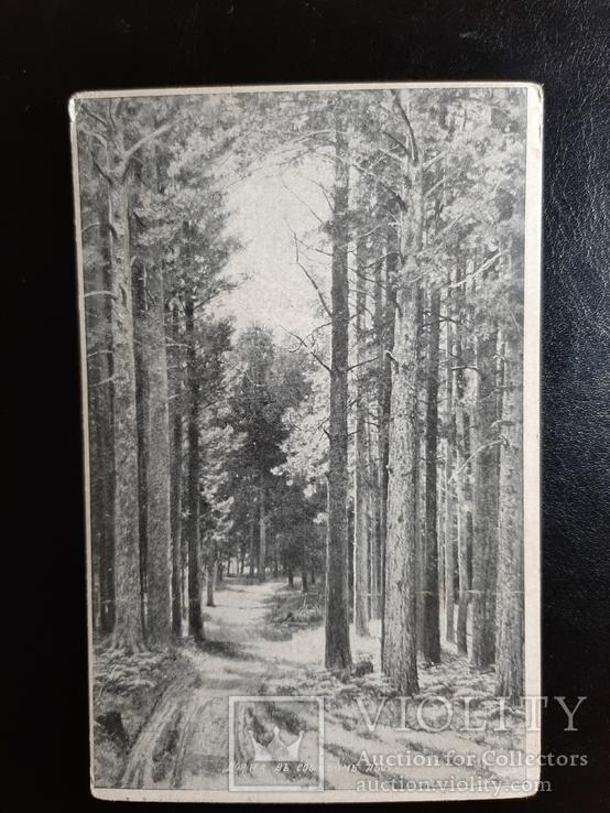 1917г. Лесная дорога, фото №2