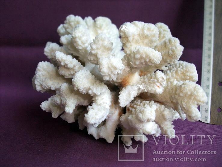 Кораллы из Индийского океана вес 903 грамма., фото №13
