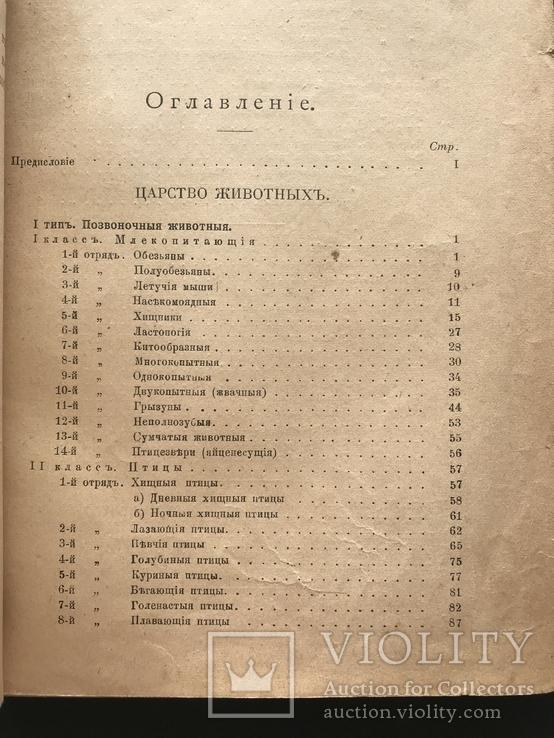 1911 Ф. Берге. Иллюстрированная Естественная история. Животные Растения Минералы, фото №4