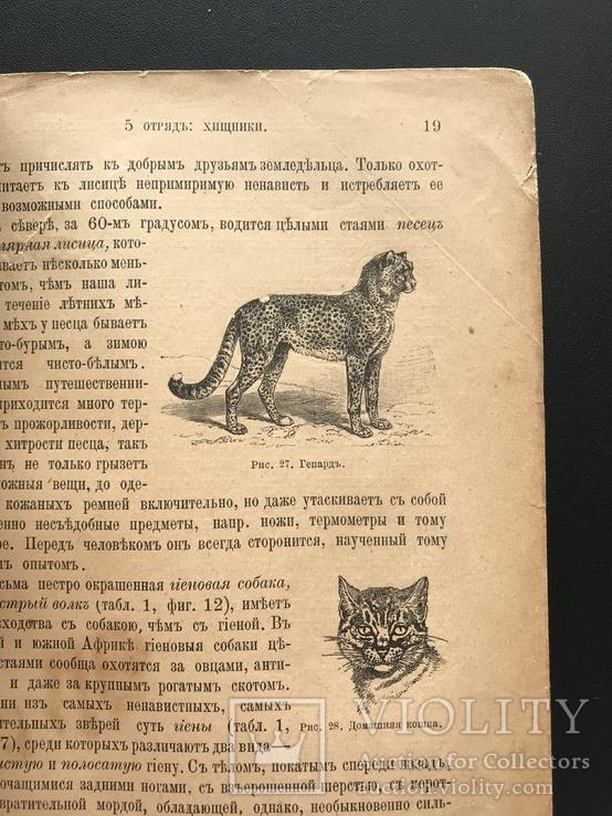 1911 Ф. Берге. Иллюстрированная Естественная история. Животные Растения Минералы, фото №8