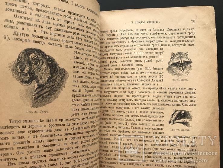 1911 Ф. Берге. Иллюстрированная Естественная история. Животные Растения Минералы, фото №9