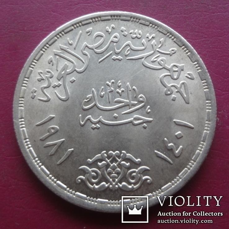 1 фунт  1981  Фао  Египет серебро (S.3.9) ~, фото №4
