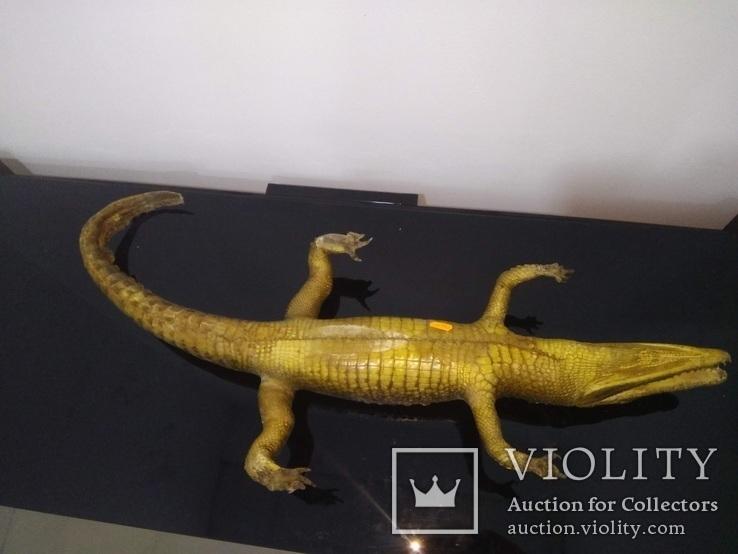 Крокодил мумия, фото №8
