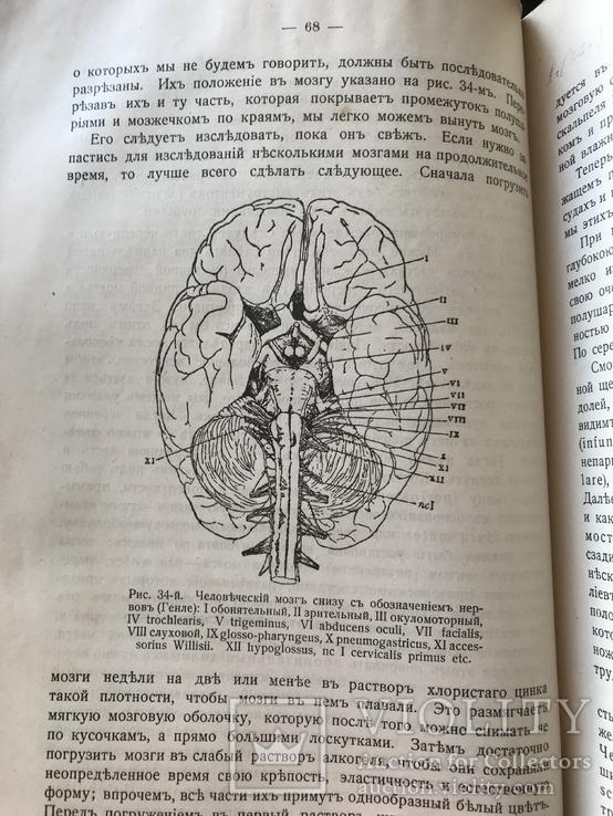 1911 Уильям Джэмс. Психология, фото №7