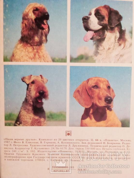 """""""Наши верные друзья"""" ( 20 открыток пород собак с опис., СССР), фото №4"""