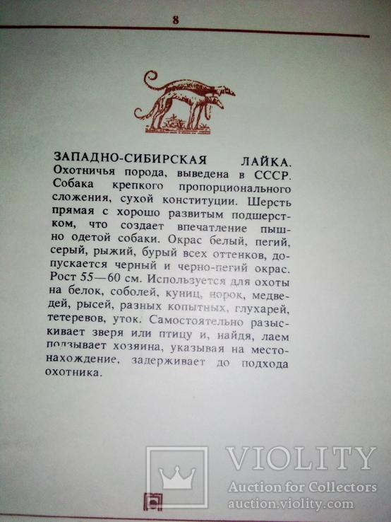 """""""Наши верные друзья"""" ( 20 открыток пород собак с опис., СССР), фото №5"""