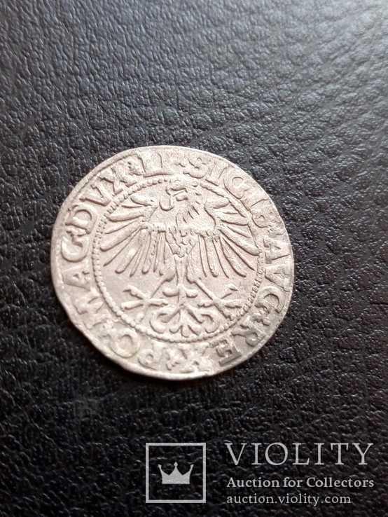 Полугрош 1549 г., фото №3