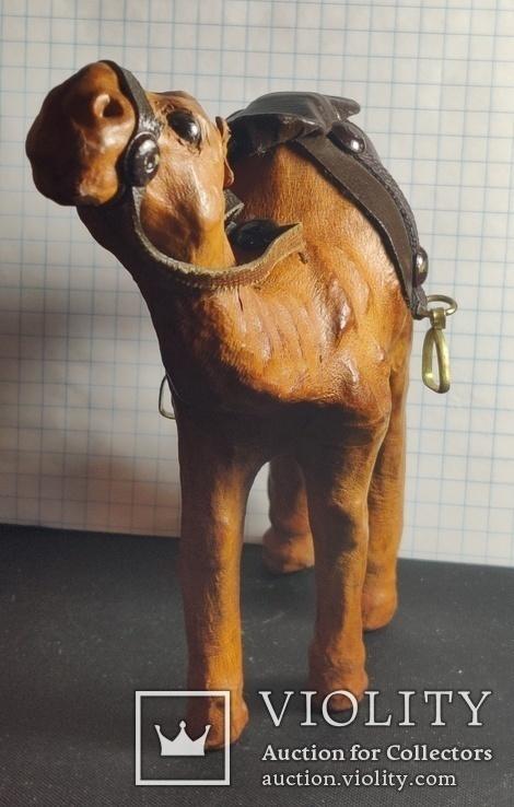 Верблюд (кожа), фото №2