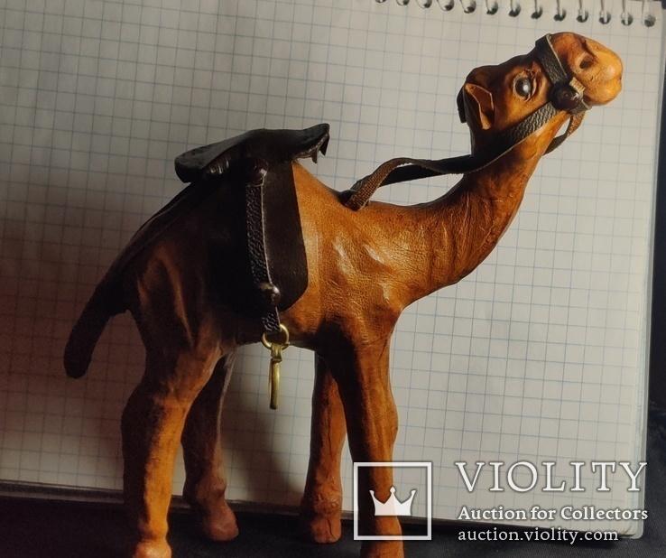 Верблюд (кожа), фото №7
