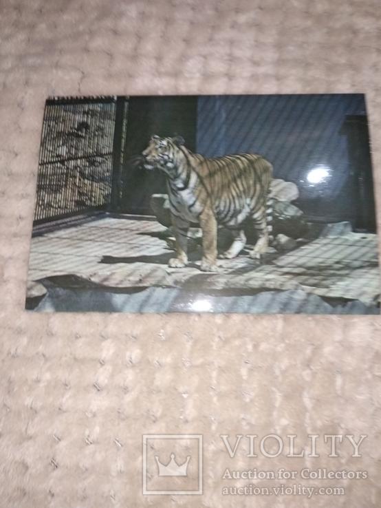 Животные, Куба, фото №11