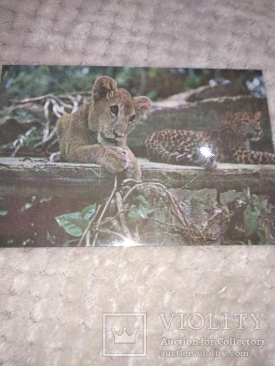 Животные, Куба, фото №13