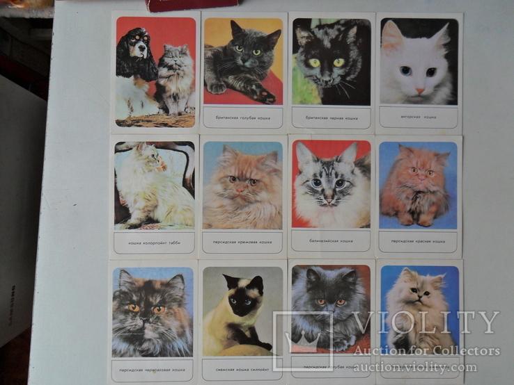 Набор открыток Кошки., фото №5