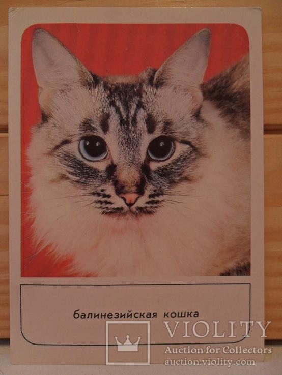 Набор открыток Кошки., фото №8