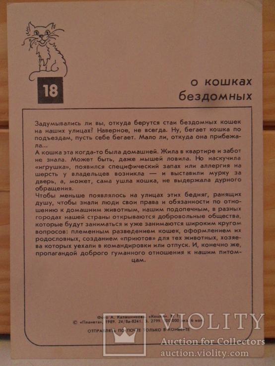 Набор открыток Кошки., фото №9